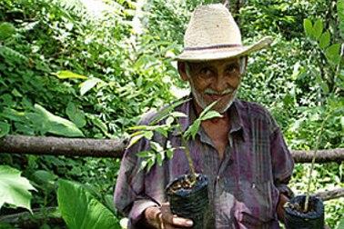 Ein Mann zeigt eine Regenwald-Pflanze